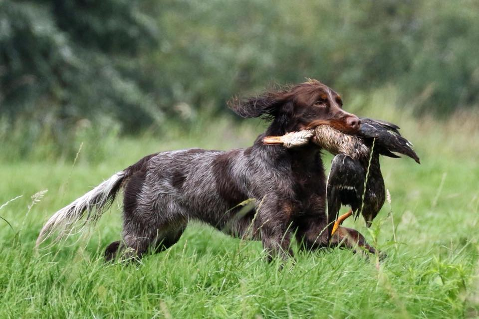 Jachthondenopleiding Heuvelrug